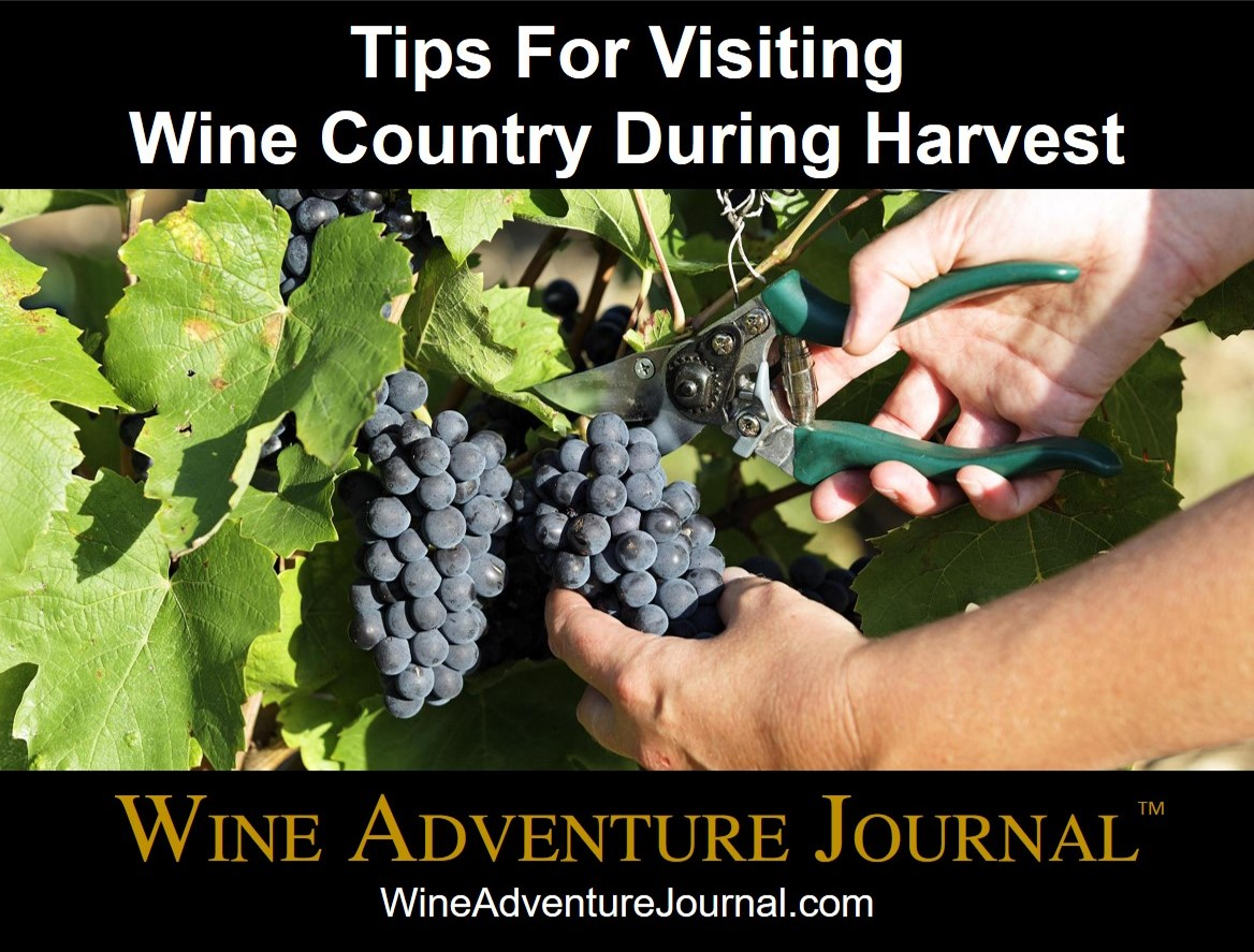 Tips For Visiting Wine Country During Harvest Wine Adventure Journal