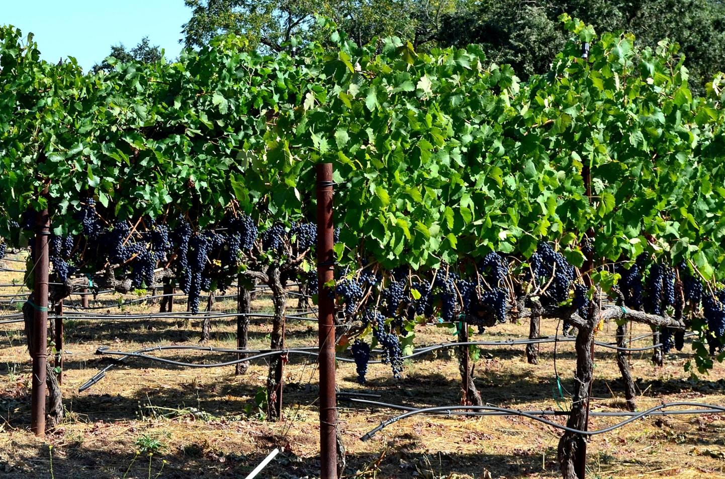 Deerfield Ranch Winery Syrah