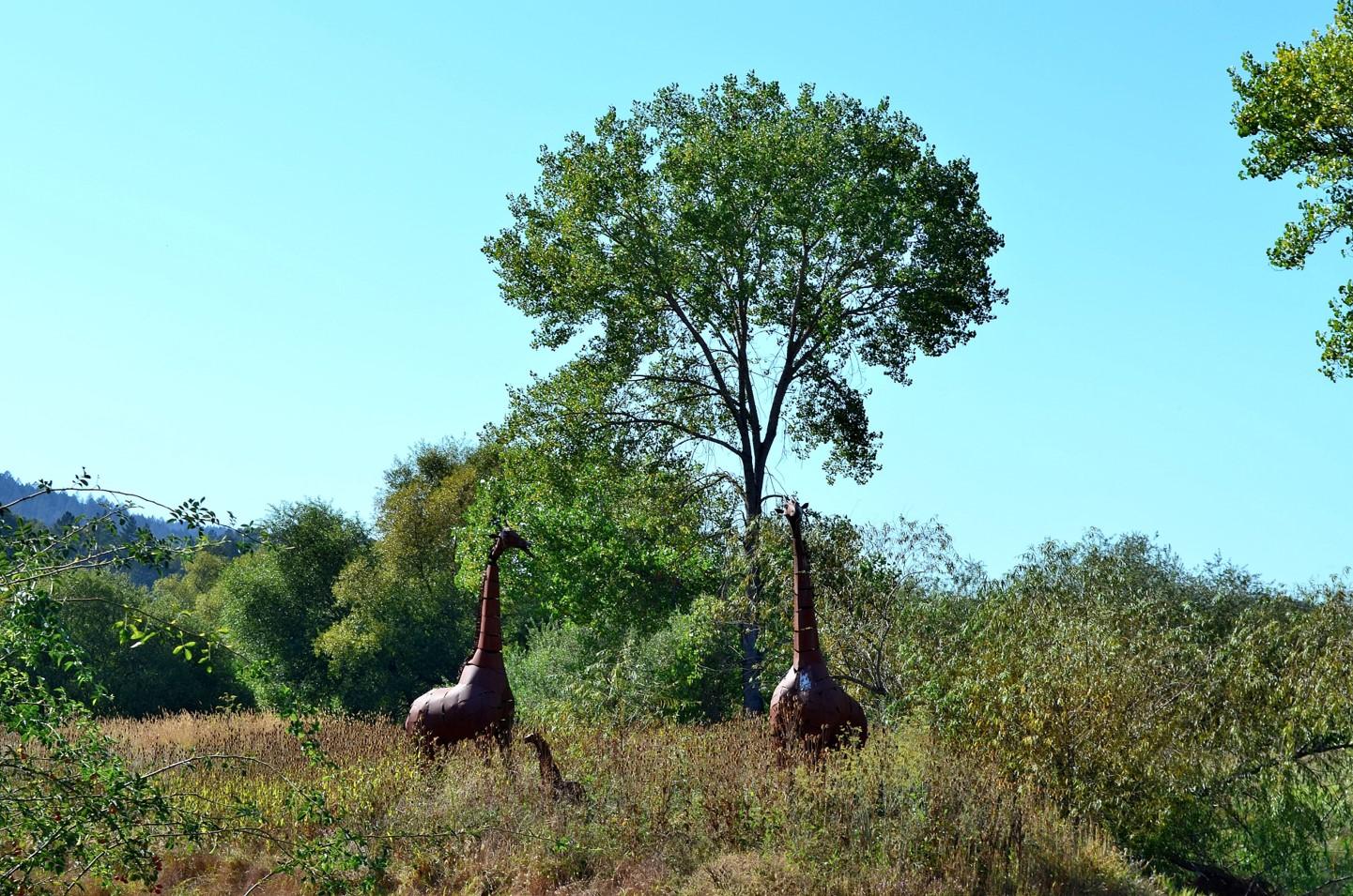 Deerfield Ranch Winery giraffes