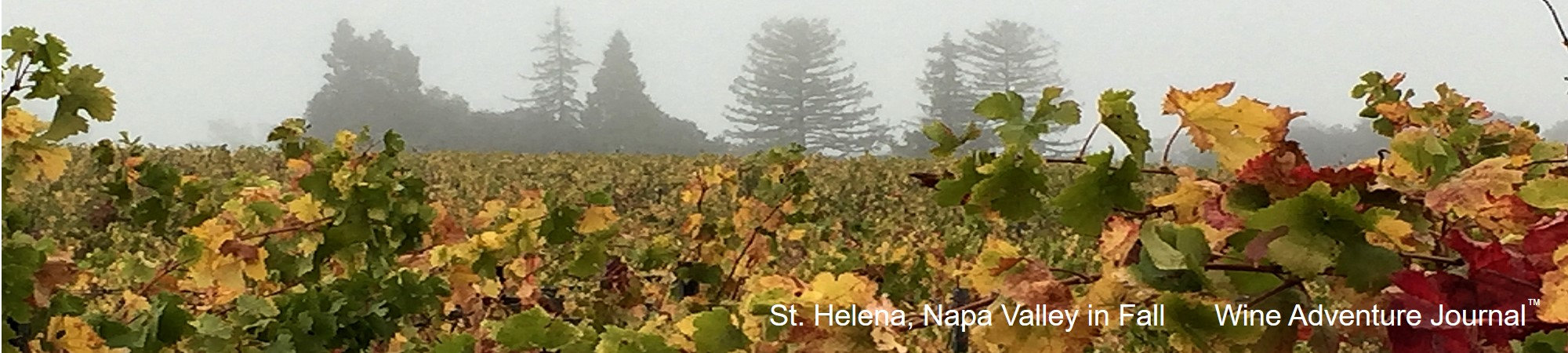 Wine Adventure Journal website header St Helena 2021 01 08
